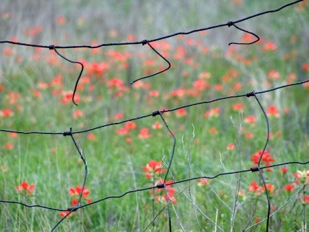 Broken Fences
