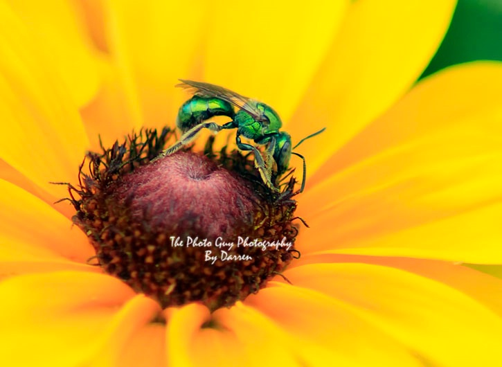 The Bee from outer Space