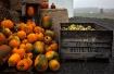 Pumpkins and Fall...