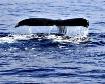 Female Whale Tail...