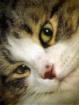 Old Cat Eyes