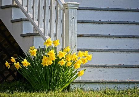 Step Into Springtime