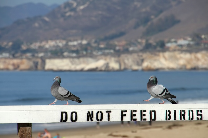 This Sign Is Strictly for the Birds