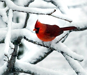 Fire and Ice - ID: 14381430 © Zita A. Strother