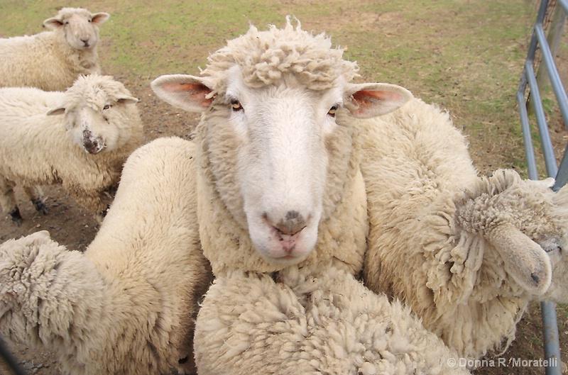 Shear warmth