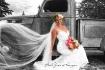 a beautifull brid...