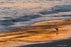 Sandpiper, Colors...