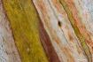 Abstract Bark Pat...