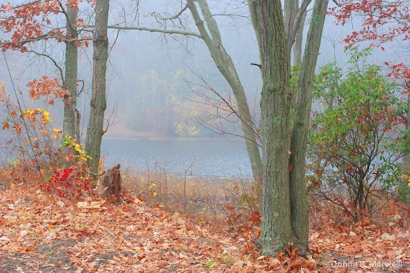 Autumn Fog at the resevoir
