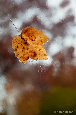 fall tears