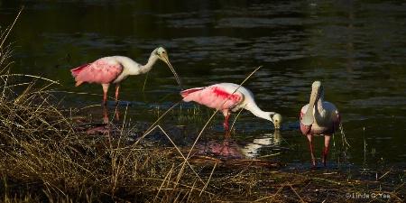 The Three Pink Amigos