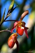 Orchid #14