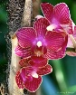 Orchid #16
