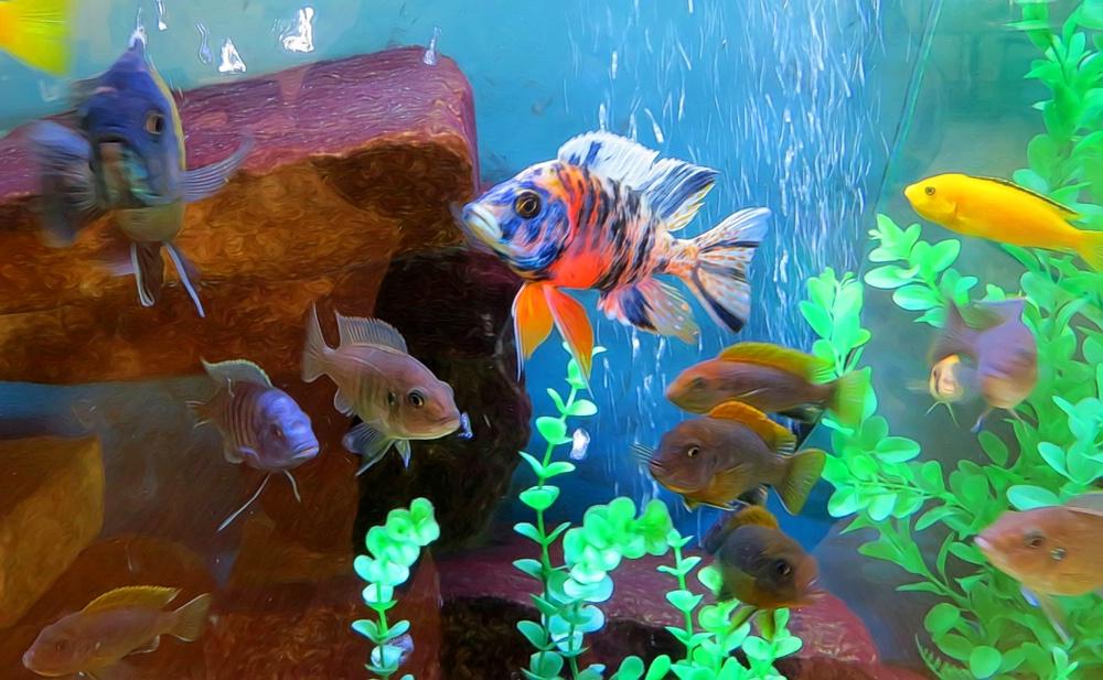 Fish At Manly Manor - ID: 15370363 © Carolyn  M. Fletcher