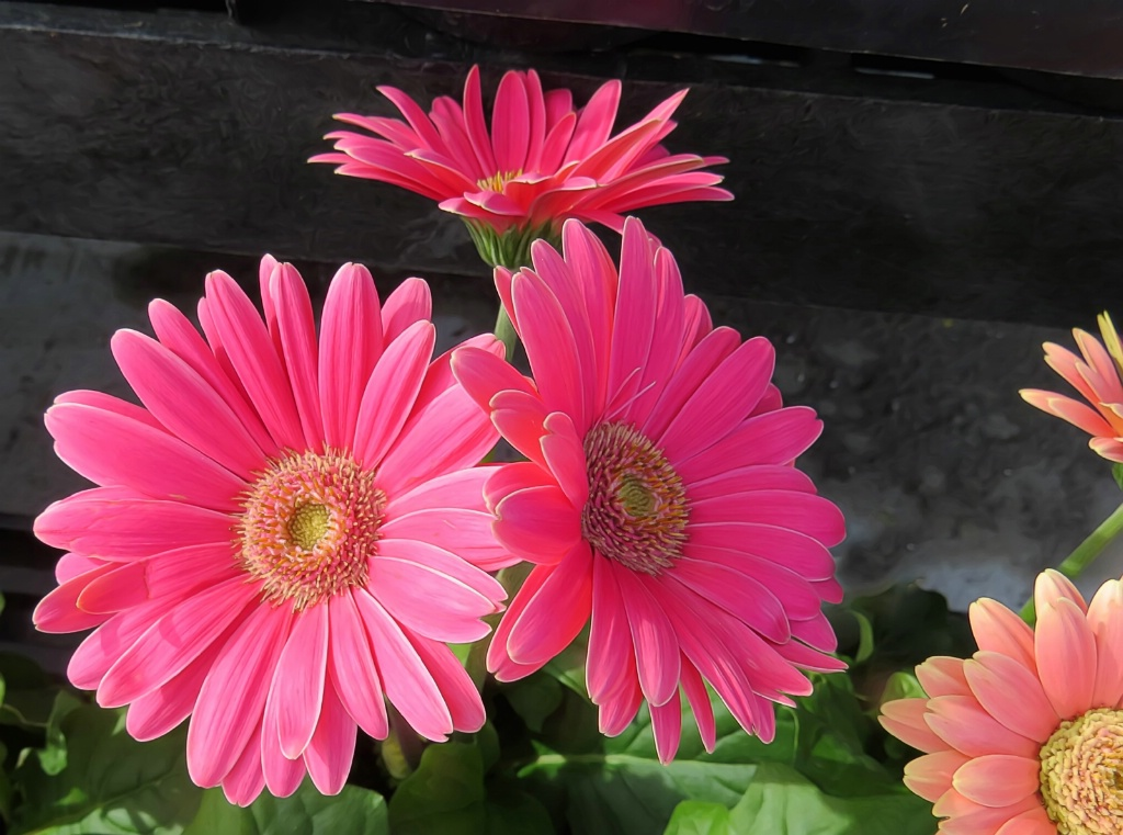 Pinksters