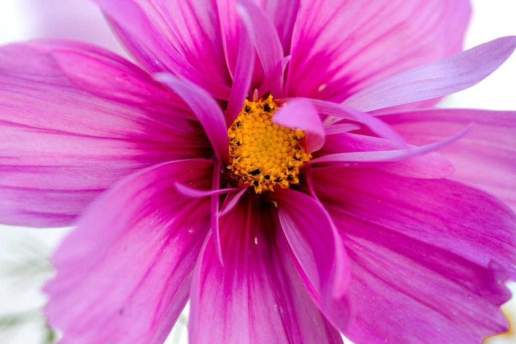 Dazzling - ID: 15449683 © Susan Gallagher