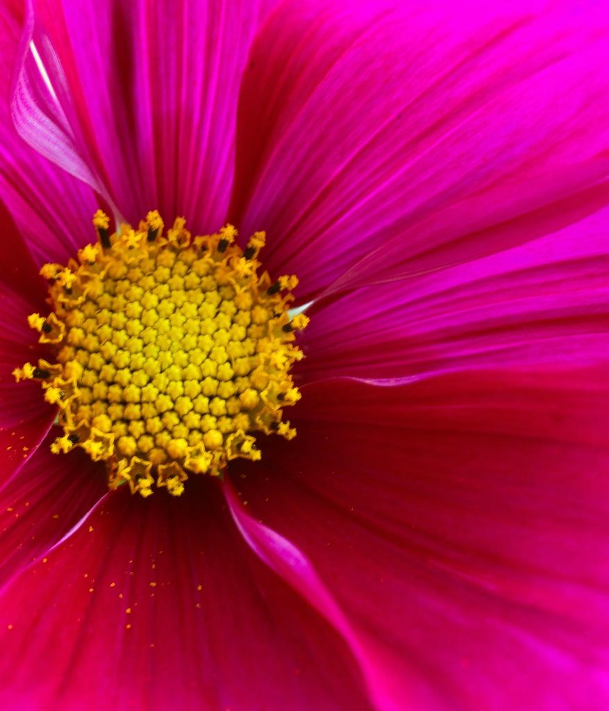Magical Cosmos - ID: 15451218 © Susan Gallagher