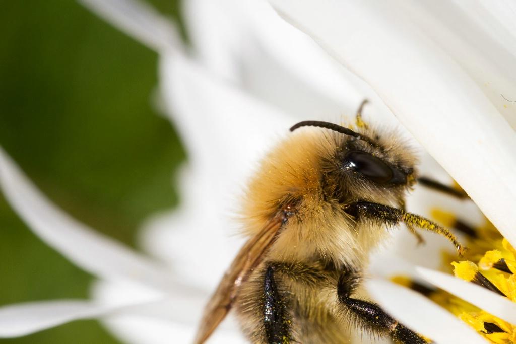 Happy Bee - ID: 15454026 © Susan Gallagher