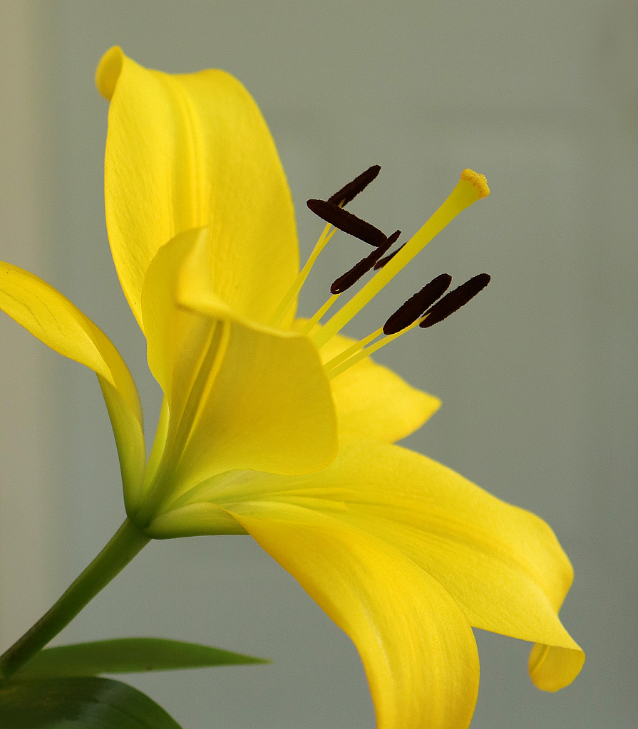 Yellow Day Lily - ID: 15726993 © Lynnmarie Daley