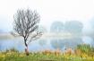 Morning Mist, Cra...