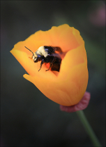 June 2019 Photo Contest 2nd Place Prize Winner