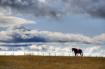 Horse on a Ridge