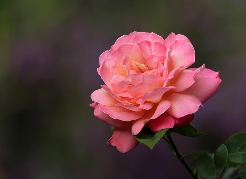 Early Morning Bloom - ID: 15728482 © Lynnmarie Daley