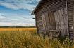 Barn Doors And Ry...