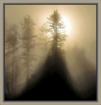 Morning Misty Lig...