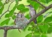 Hummingbird feedi...