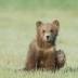 © Kitty R. Kono PhotoID# 15733557: Waving Hello From Alaska