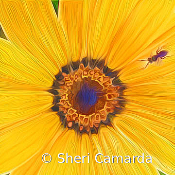 My Space - ID: 15737295 © Sheri Camarda