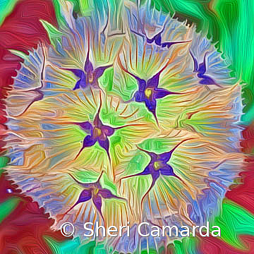 Stary! - ID: 15737302 © Sheri Camarda