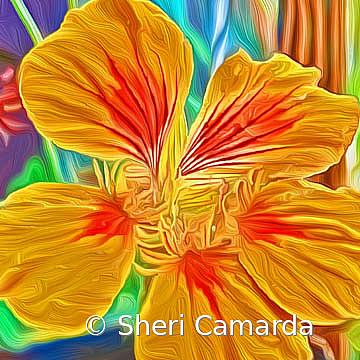 Nasturtium Art - ID: 15737309 © Sheri Camarda