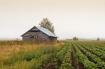 Old Barn Houses O...