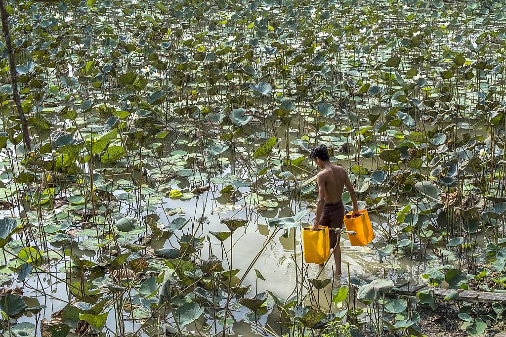 carrying water from lotus lake