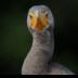 2Looking At You - ID: 15753361 © Carol Eade