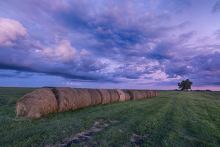 Summer 19-8717 - ID: 15758289 © Raymond E. Reiffenberger