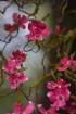 Little pink Flowe...
