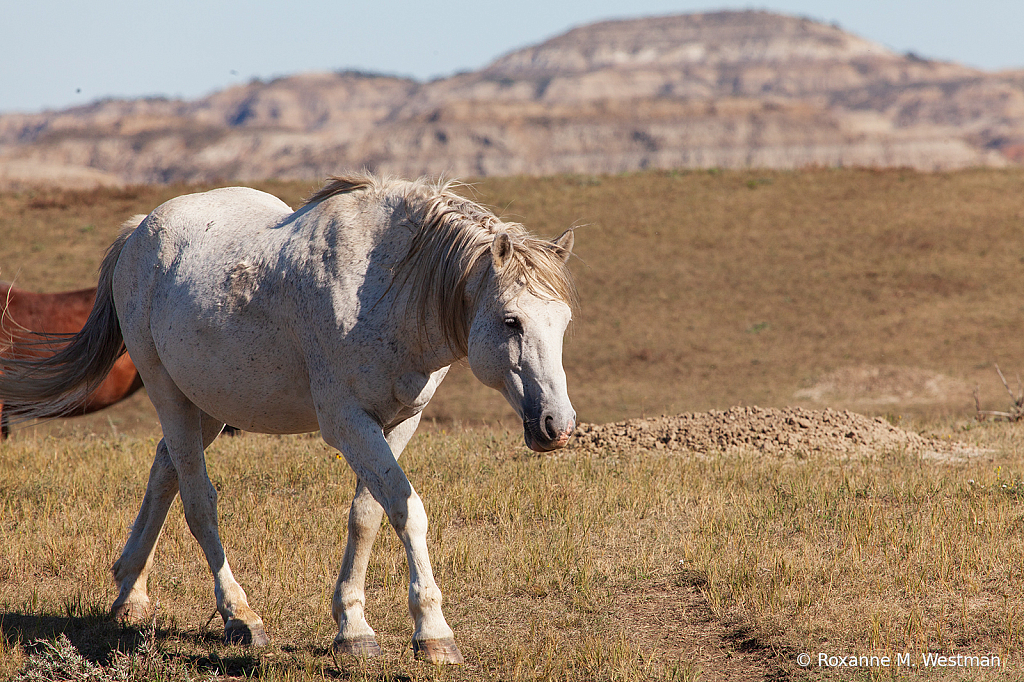 Life of wild horses - ID: 15764486 © Roxanne M. Westman