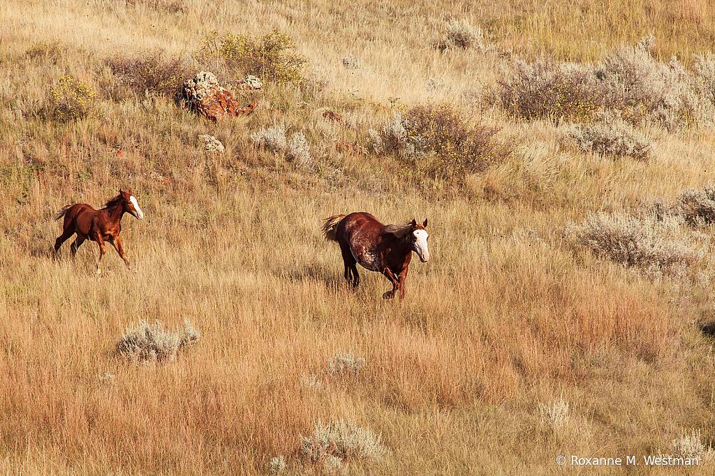 Wild horses 10 2019 - ID: 15764494 © Roxanne M. Westman