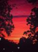 Red Sky In Mornin...