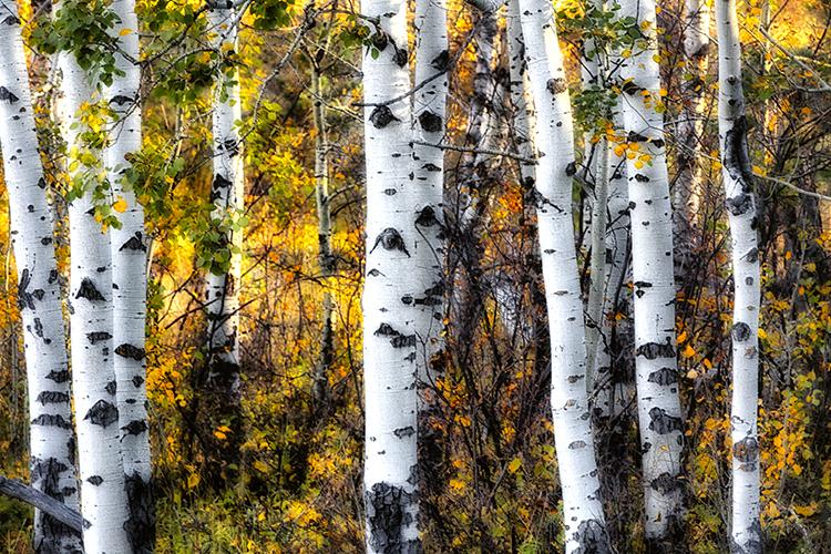 Hills 14 0464xxxtif - ID: 15768858 © Raymond E. Reiffenberger