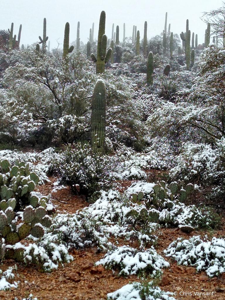 20190222_131448845_HDR Snow - Tucson, AZ - ID: 15774481 © Chris Vansant