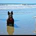 2Beach Goggles - ID: 15776967 © Zelia F. Frick