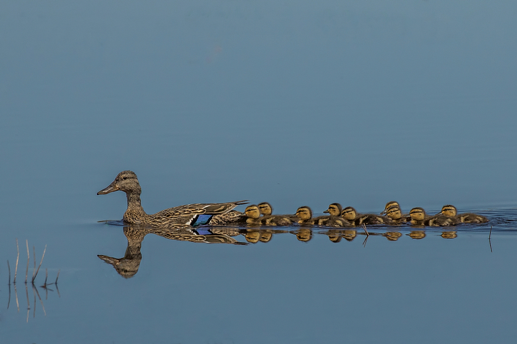 All your Ducks in a Row