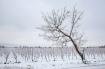 One Winter Tree