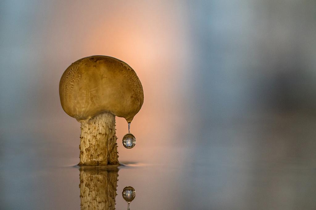 Mushroom Drop