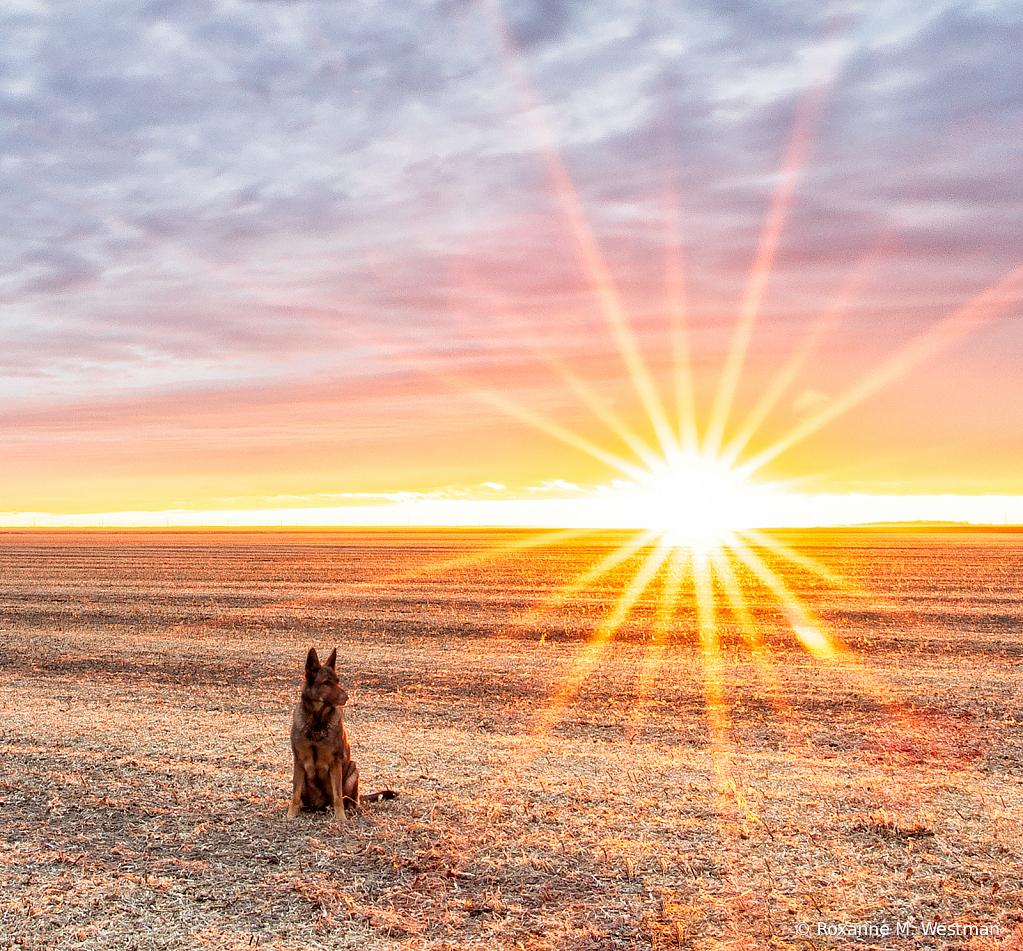 Stealing the sunlight - ID: 15781942 © Roxanne M. Westman