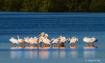 Florida Showbirds